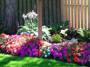 A corner bed of Impatiens~ Love these!!!